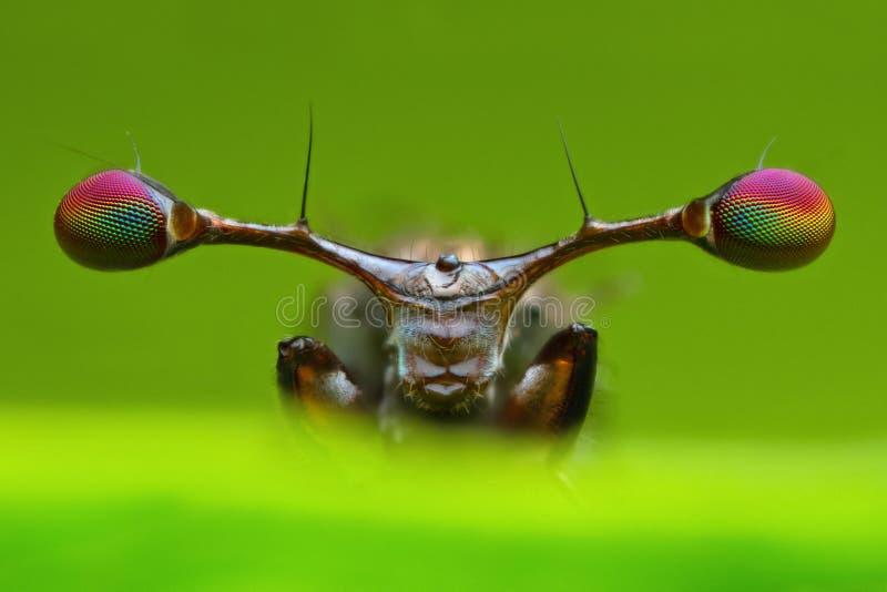 Het extreme vooraanzicht overdreef details van steel eyed vlieg op achtergrond van het aard de groene blad in aard stock afbeeldingen