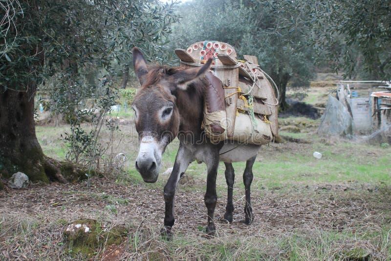 Het ezels` s leven stock fotografie