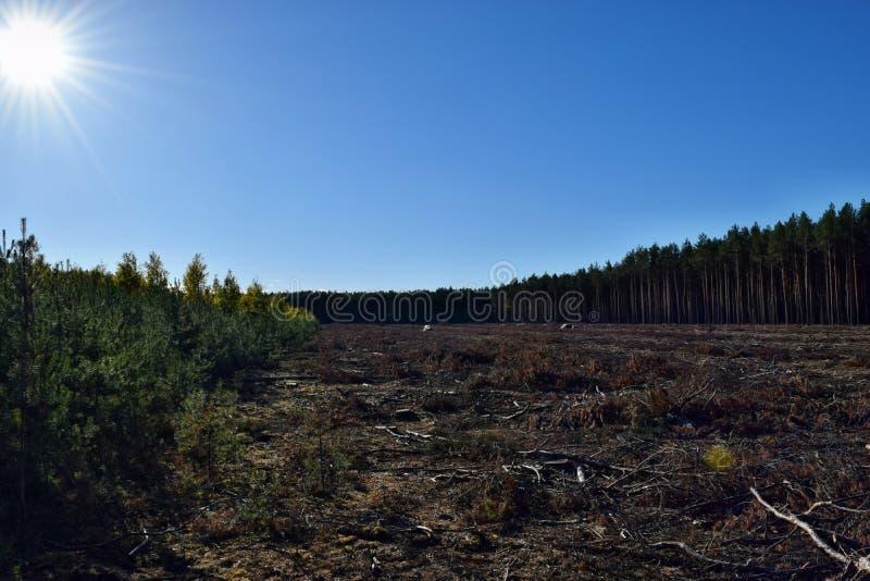 Het Felling van bomen in het bos royalty-vrije stock foto