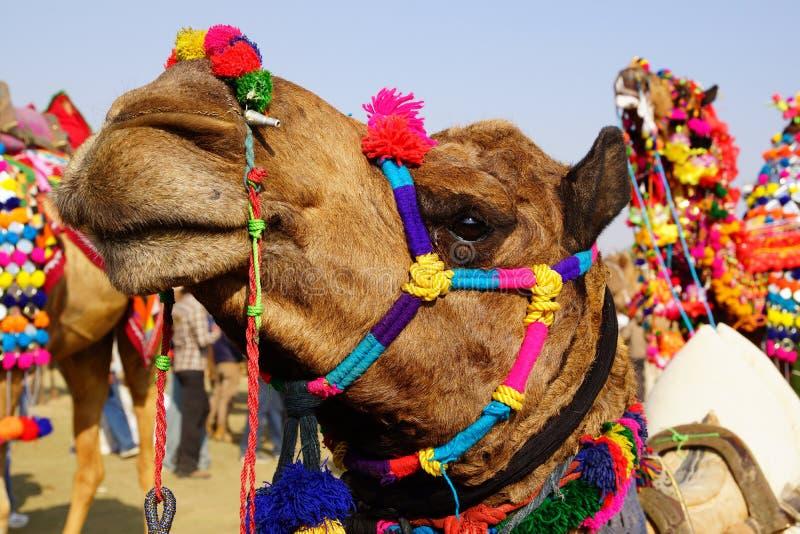 Het Festival van de kameel in Bikaner, India stock afbeelding