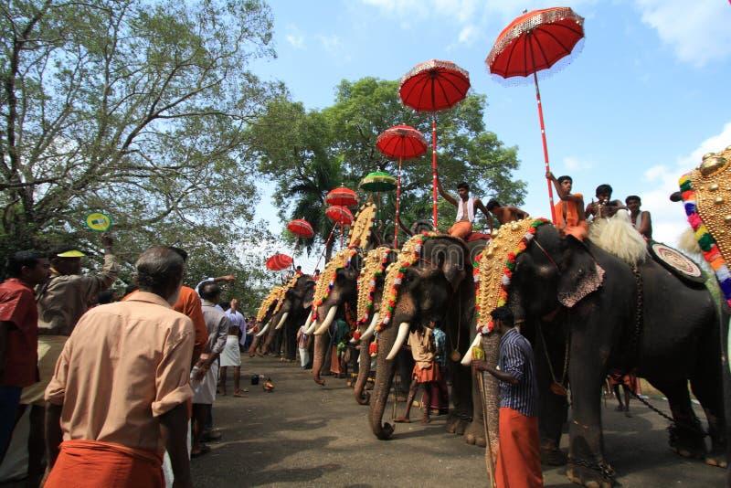 Het Festival van de olifant stock foto