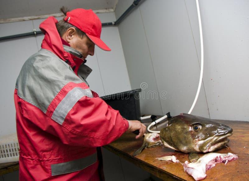 Het fileren van de visser kabeljauw royalty-vrije stock fotografie