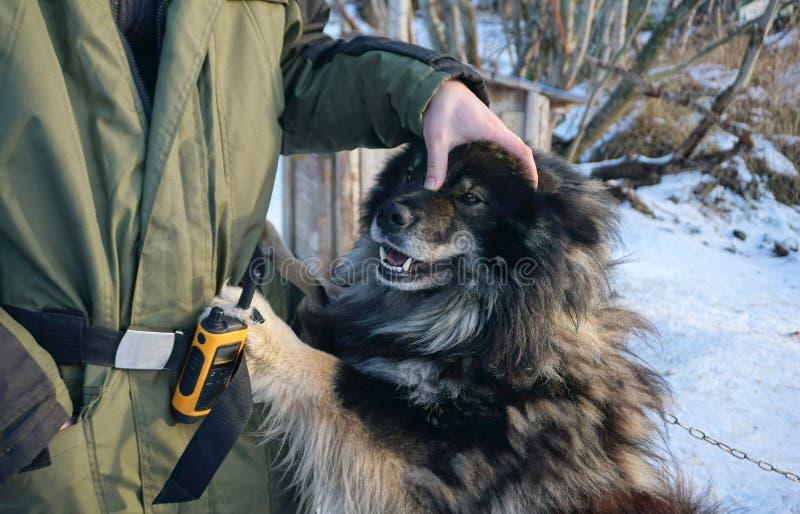 Het finse Lapphund-spelen met de eigenaar royalty-vrije stock foto
