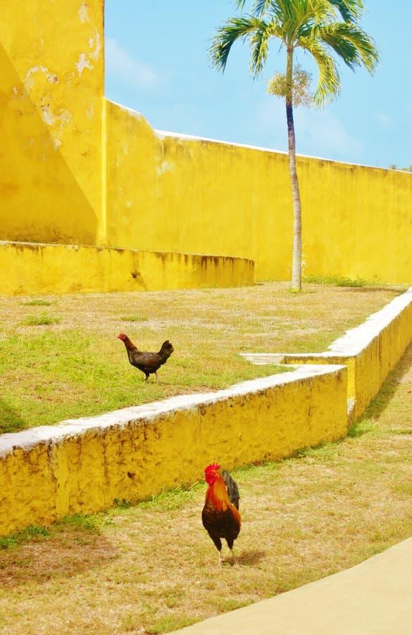 Het fort christiansted st croix wachten van usvi de wilde kippen stock foto