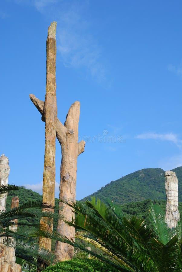 Het fossiel kijkt als boom die zich daar bevindt royalty-vrije stock afbeelding