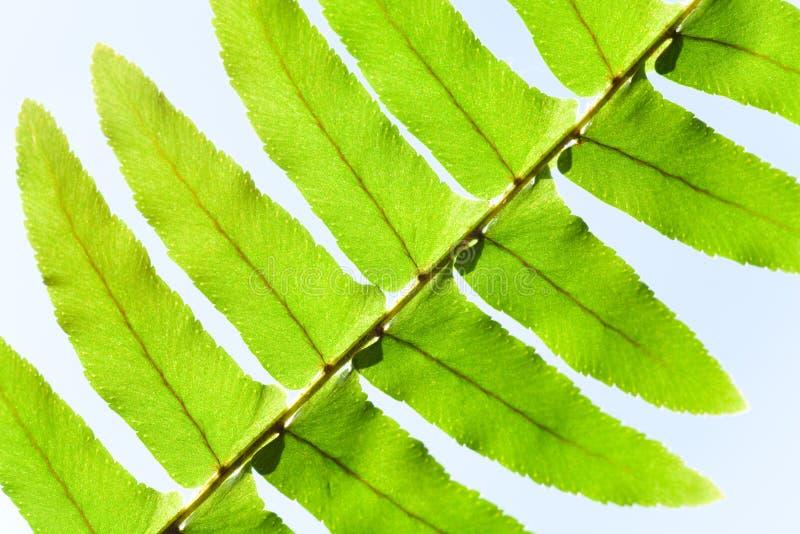 Het fragment van het blad van venster ferny installatie royalty-vrije stock foto's