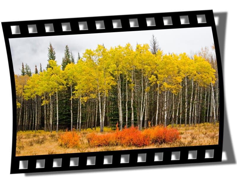 Het Frame van de filmstrip stock foto