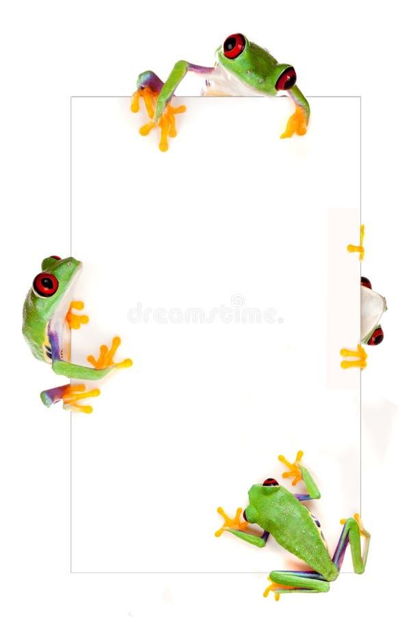 Het frame van de kikker royalty-vrije stock fotografie