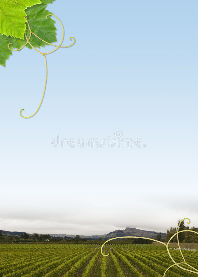 Het frame van de wijngaard stock foto's