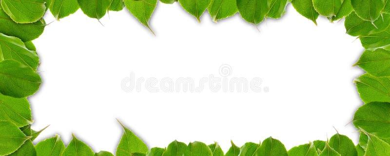 Het Frame van de zomer van Groene Bladeren royalty-vrije stock fotografie
