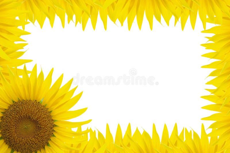 Het Frame van de zonnebloem stock illustratie