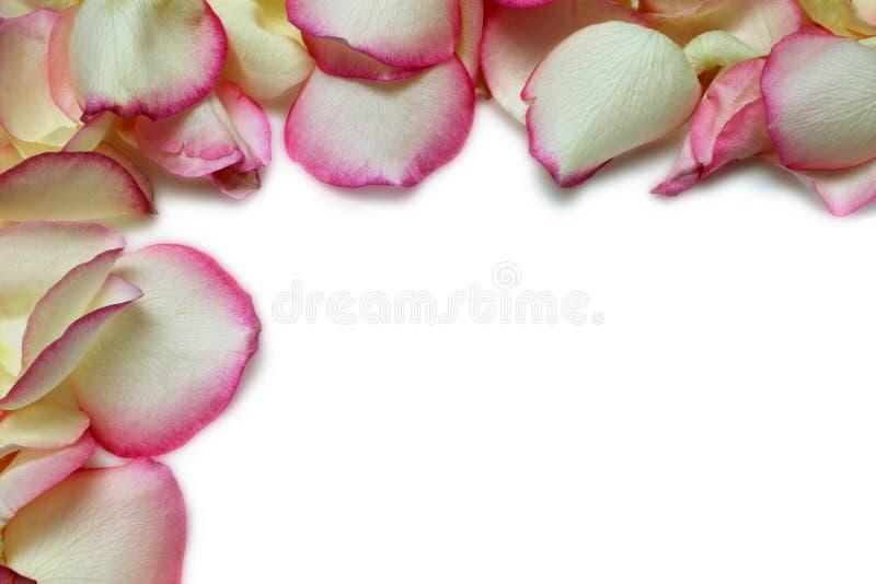 Het Frame van het bloemblaadje royalty-vrije stock foto's