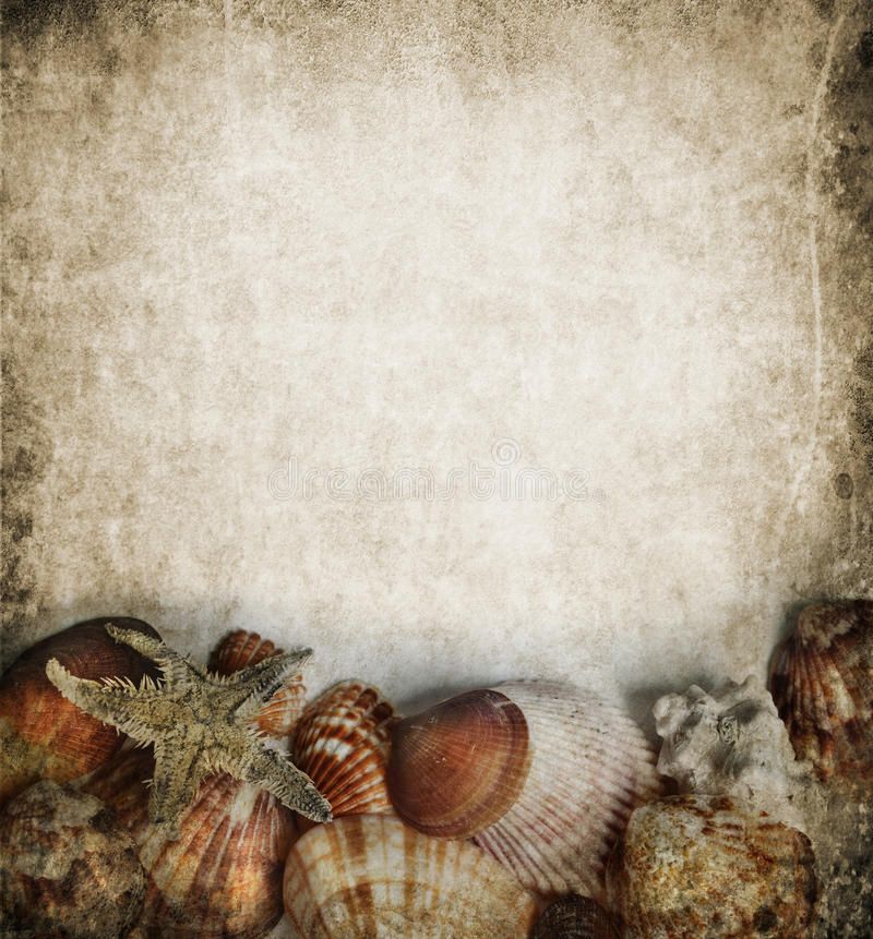 Het frame van zeeschelpen stock fotografie
