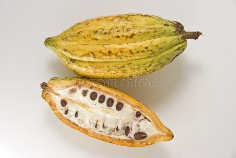 Het Fruit van de cacao stock foto