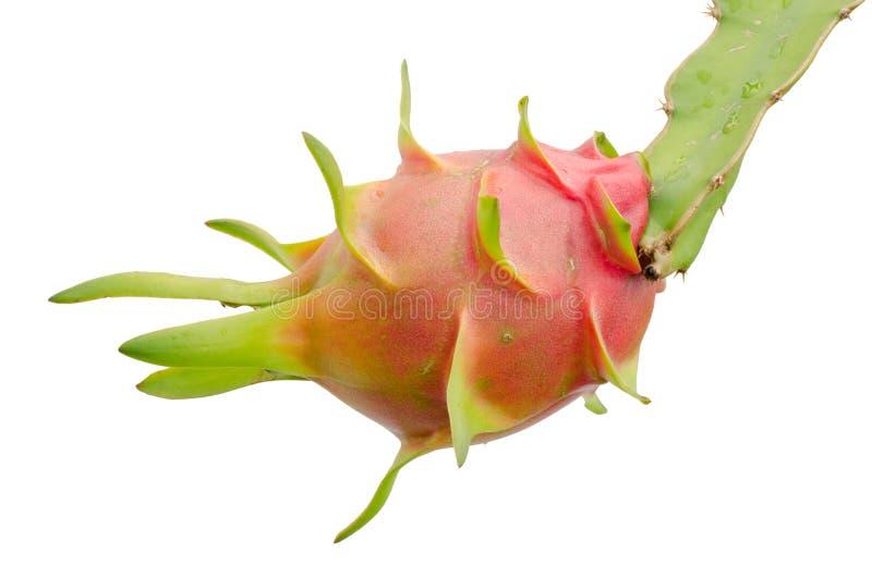 Het fruit van de draak op boom royalty-vrije stock foto
