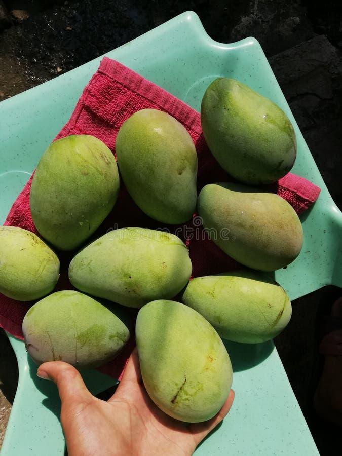 Het fruit van de mango stock foto's