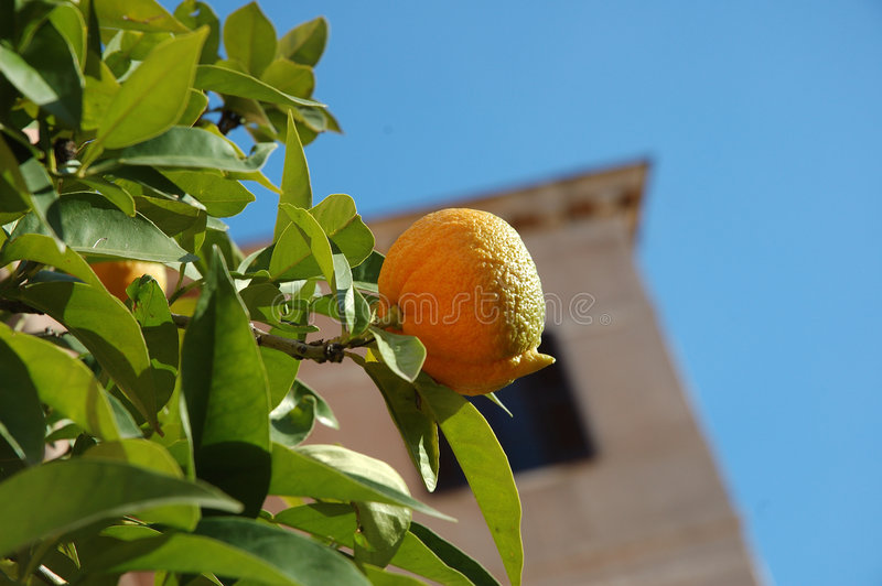 Het Fruit Van De Winter Stock Afbeelding
