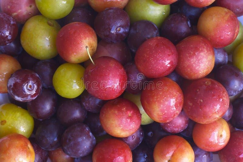 Het fruit van de zomer stock afbeeldingen