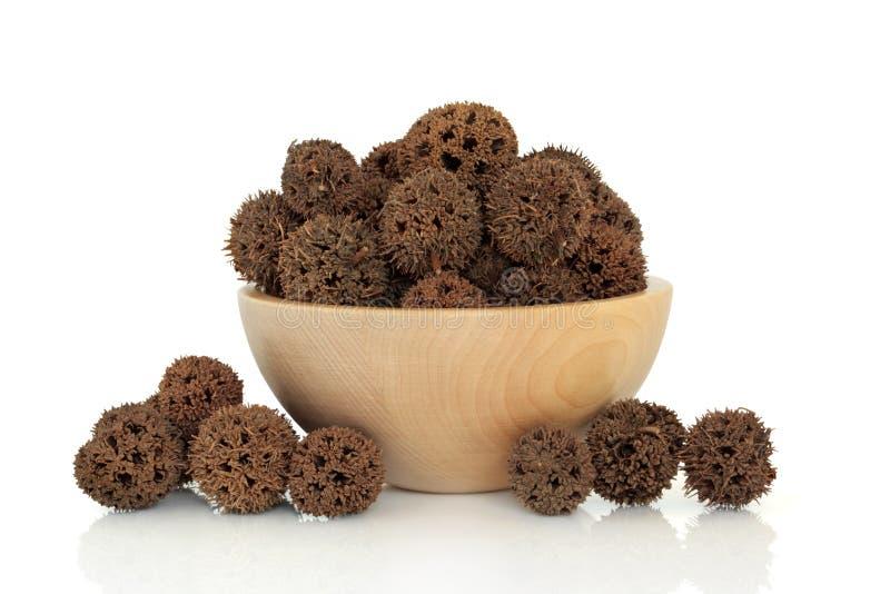 Het Fruit van Sweetgum stock foto's