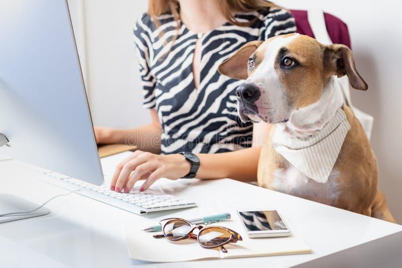 Het gaan met huisdierenconcept werken: leuke hond met vrouwelijke eigenaar in F royalty-vrije stock fotografie