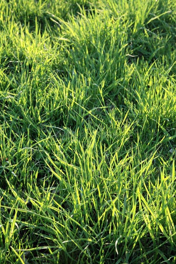 Het gazon van het gras royalty-vrije stock foto's