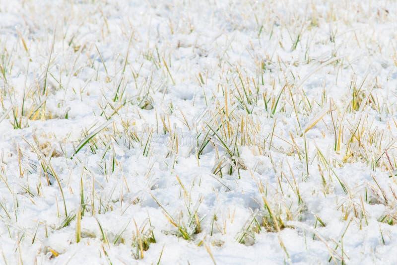 Het gazon van ijskristallen stock foto