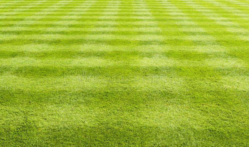 Het gazonachtergrond van het gras royalty-vrije stock afbeelding