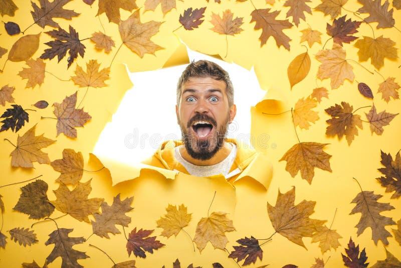 Het gebaarde mens spelen met bladeren en het bekijken camera De herfstjongen die voor de Herfstverkoop voorbereidingen treffen Gr stock afbeelding