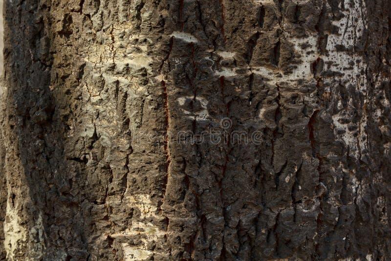 Het gebarsten close-up van de boomschors Oude Houten Textuur Achtergrond stock foto's