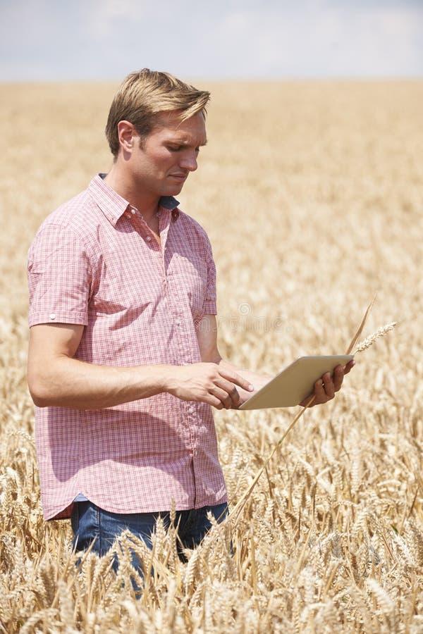Het Gebied die van landbouwersinspecting crops in Digitale Tablet gebruiken stock fotografie