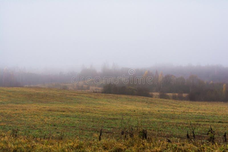 Het gebied en de heuvels met droog gras en het fokken, het bos zijn dekking royalty-vrije stock afbeeldingen