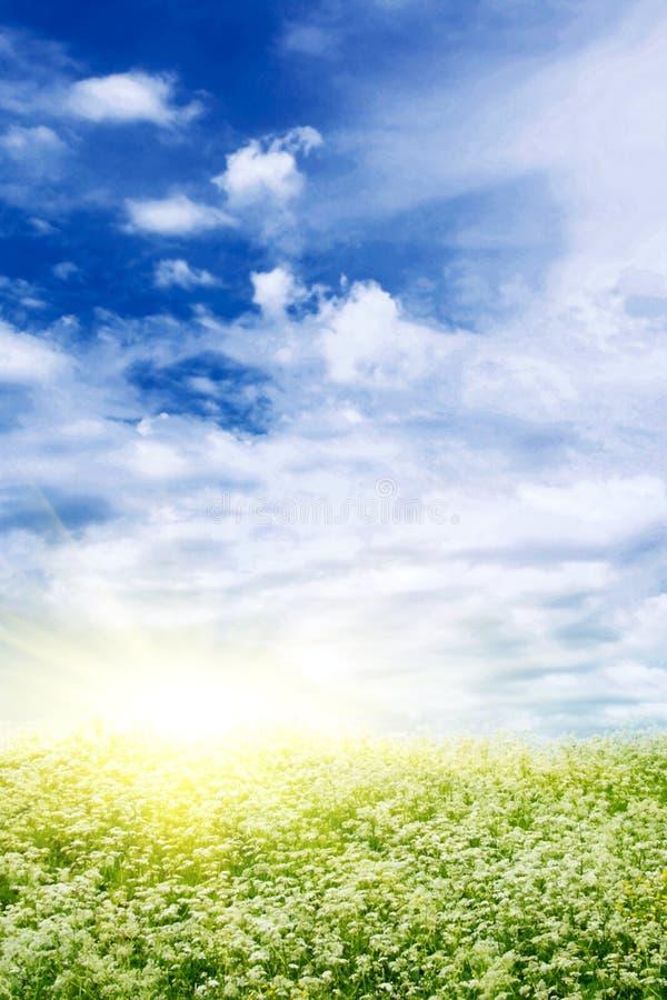 Het gebied en de zon van de bloem. royalty-vrije stock fotografie