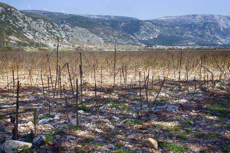 Het gebied na het oogsten van zonnebloem stock fotografie