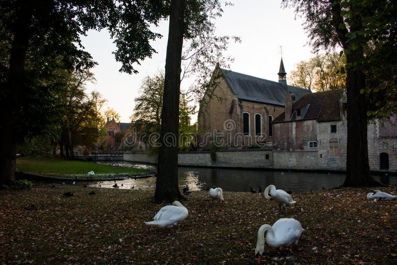 Het gebied van Begijnhofbeguinage en zwanen, Brugge royalty-vrije stock afbeeldingen