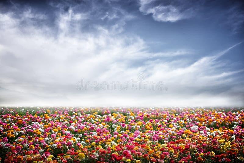 Het gebied van bloemen royalty-vrije stock foto's