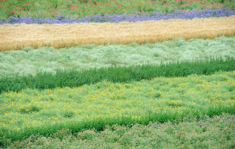 Het gebied van bloemen stock fotografie
