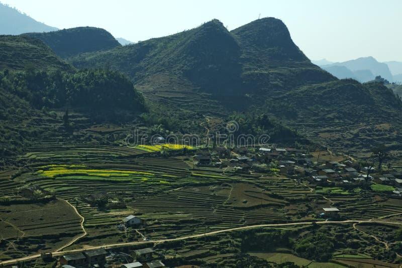 Het gebied van Canola stock foto's
