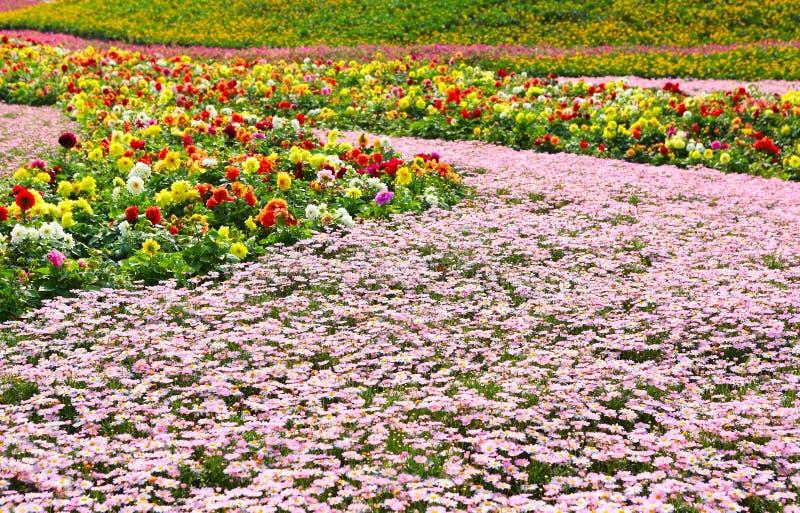 Het gebied van de bloem royalty-vrije stock afbeelding