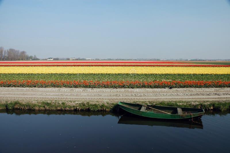 Het gebied van de bloem stock foto's