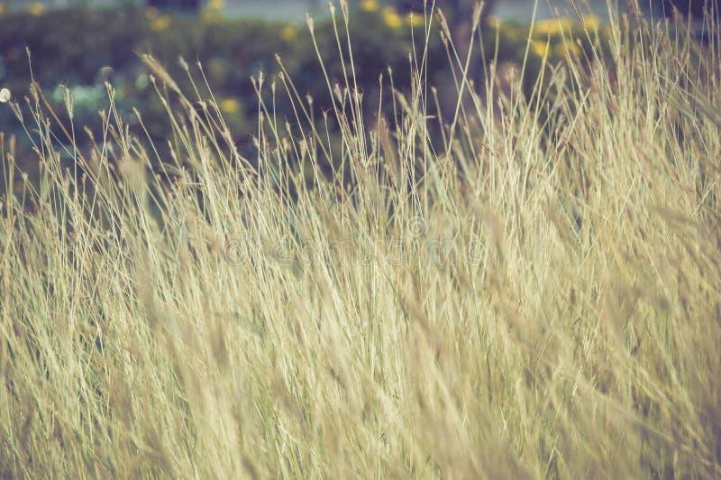 Download Het Gebied Van De Grasbloem In De Aard Stock Afbeelding - Afbeelding bestaande uit gras, bloem: 39100409