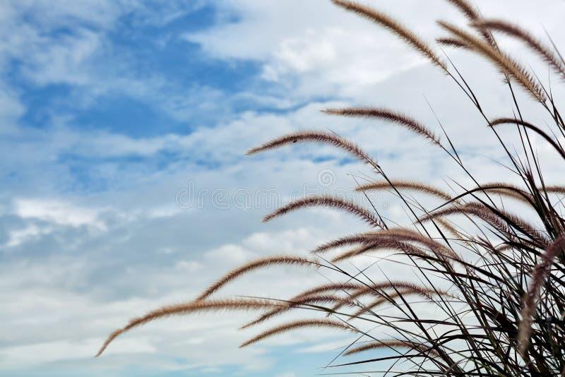 Het gebied van de grasbloem met blauwe hemel royalty-vrije stock afbeeldingen