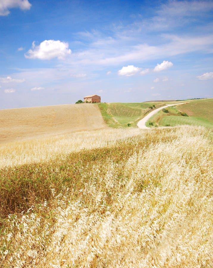 Het gebied van de haver in Toscanië royalty-vrije stock afbeeldingen