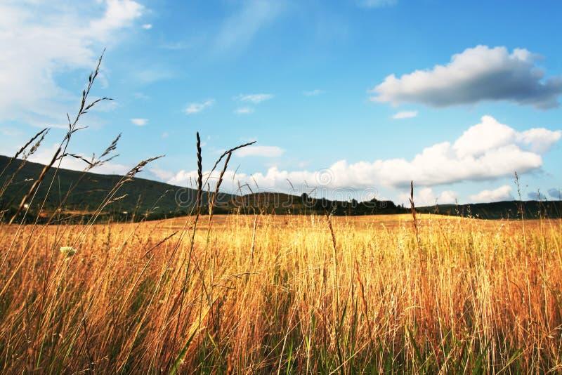 Het gebied van de herfst stock foto