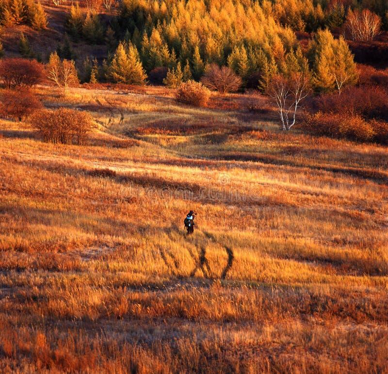 Het gebied van de herfst stock foto's