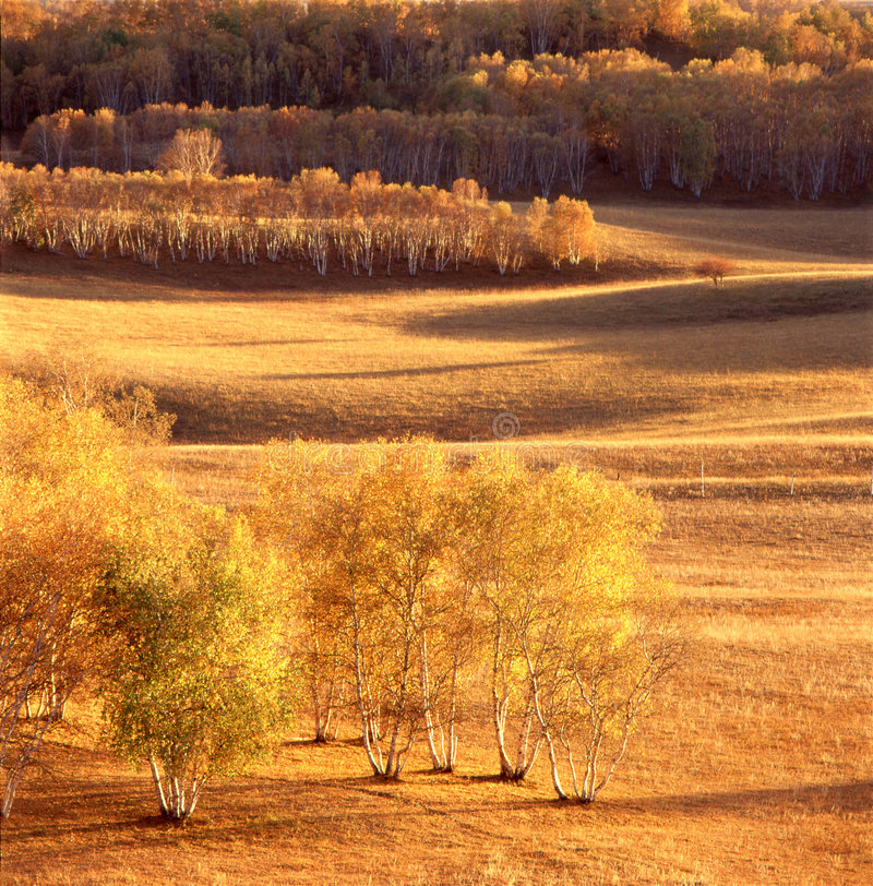 Het gebied van de herfst royalty-vrije stock fotografie