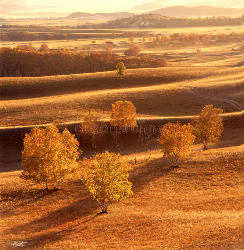 Het gebied van de herfst stock afbeelding