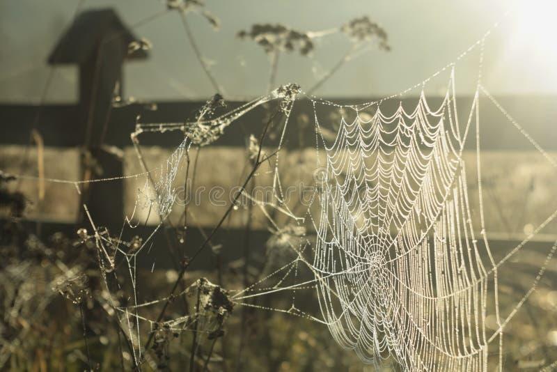 Het gebied van het de herfstgras Vroege Ochtendzon Het zonlicht denkt in een Spinneweb na royalty-vrije stock afbeeldingen