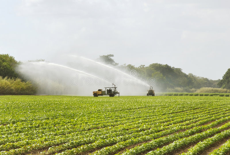 Het Gebied van de irrigatie stock afbeeldingen