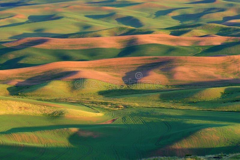 Het gebied van de landbouw royalty-vrije stock afbeeldingen