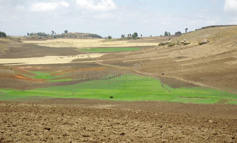 Het gebied van de landbouw - Ethiopië royalty-vrije stock afbeelding